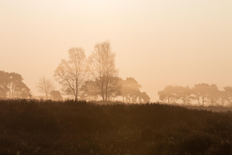 Pasture Hollesley