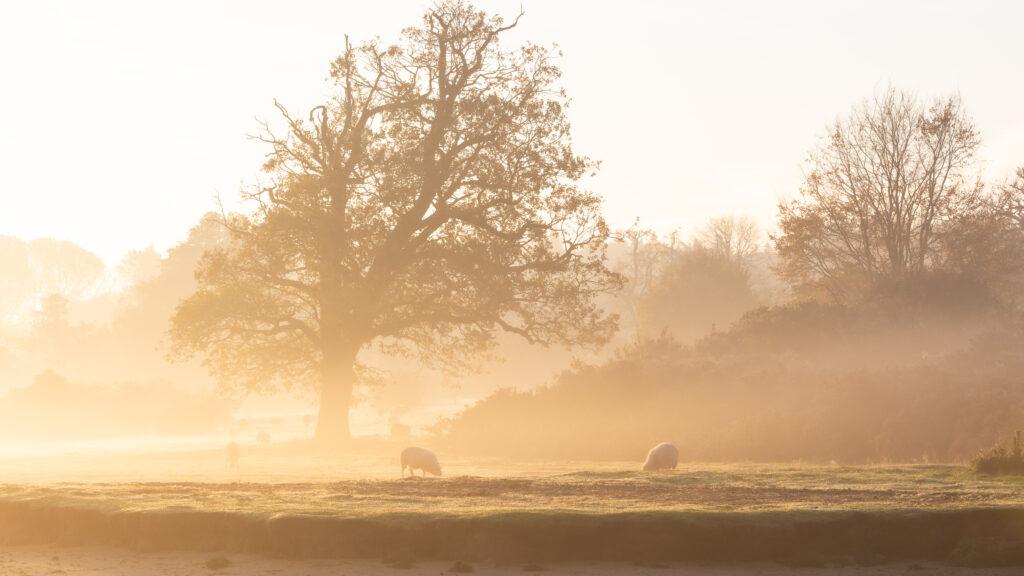 Distancing, River Orwell, Suffolk
