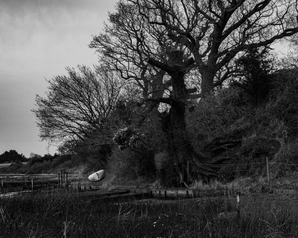 Riverbank, Iken Cliffs, Suffolk