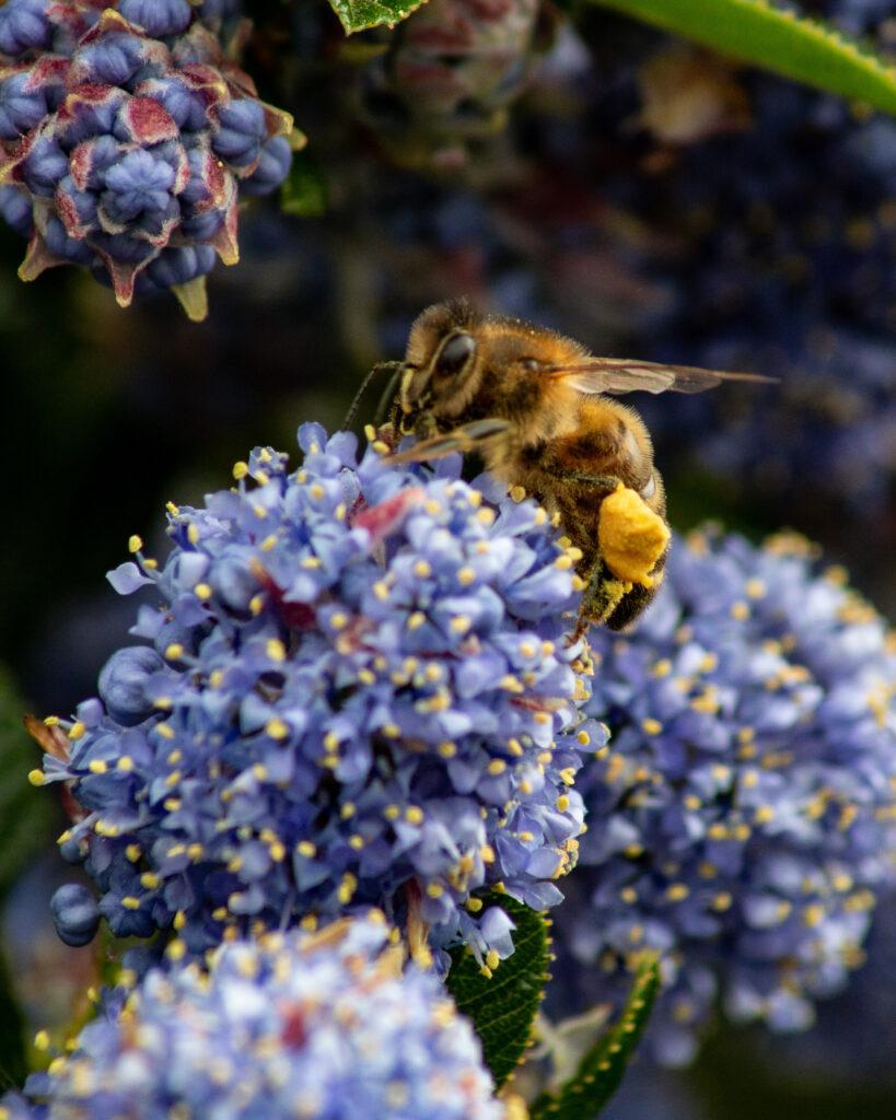 Pollinators, Ipswich, Suffolk