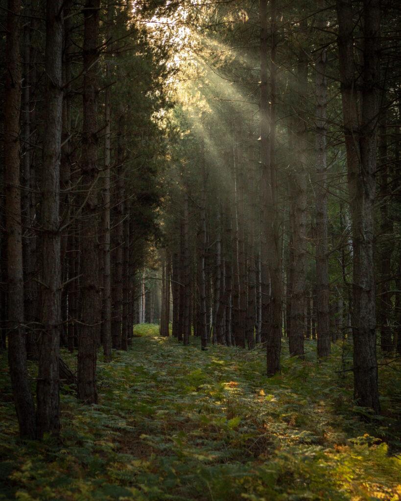 Shepherd, Rendlesham Forest, Suffolk