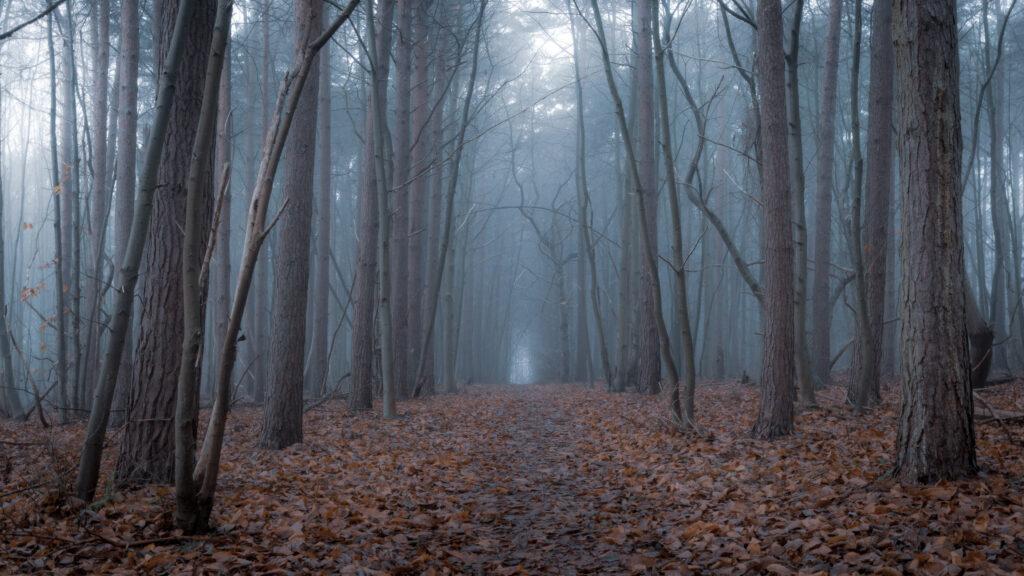 Ancient corridor, Suffolk