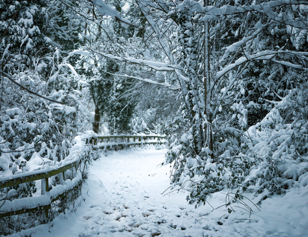 Enchanting, Holywells Park