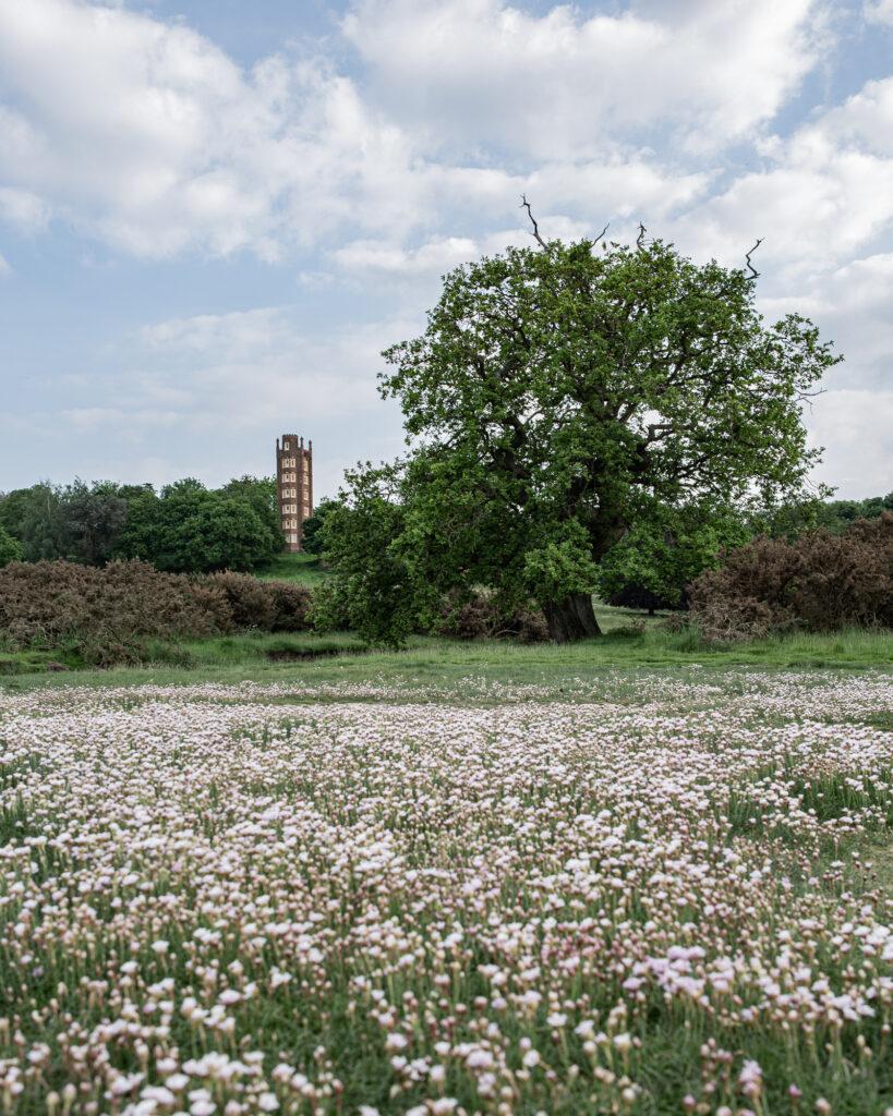 Efflorescence, Freston, Suffolk