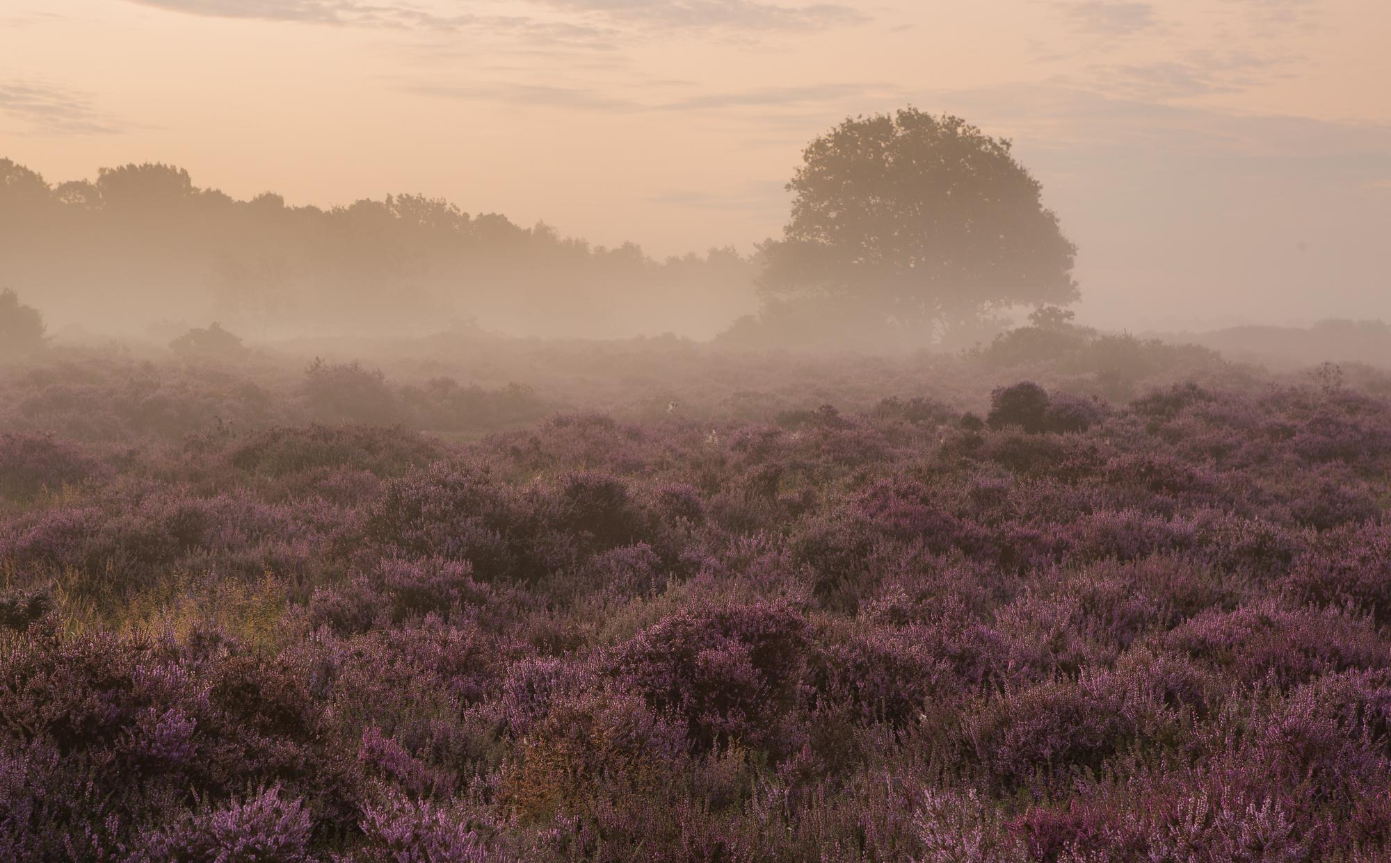 Revelry, Suffolk