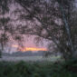 Dynamics, Rendlesham Forest